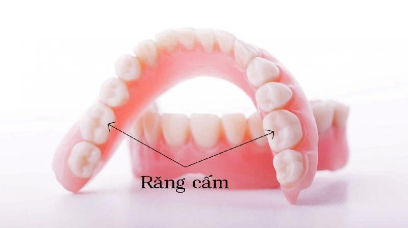Đặc điểm của răng số 6