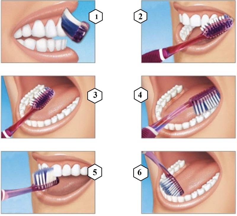 Các bước đánh răng cơ bản